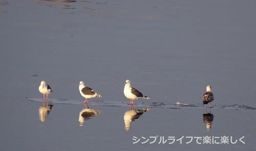お弁当週報vol.22、網走港の鳥