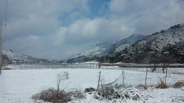 시골집 풍경:뽀드득 아침산책길