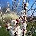 Buona Pasqua !!! by Giulia_Minetti