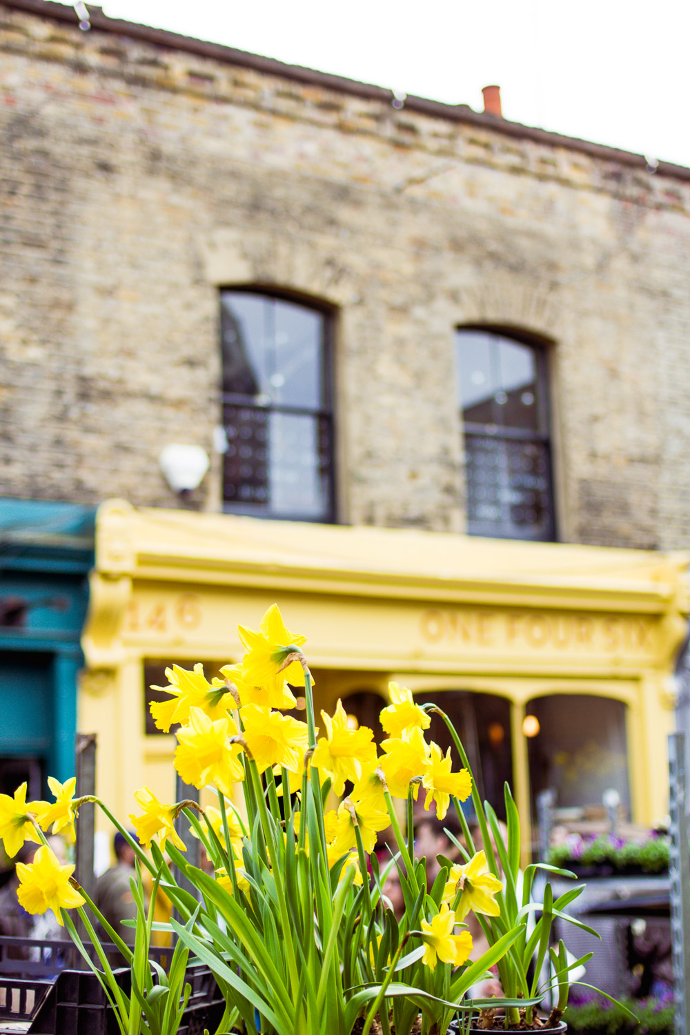 columbia road daffodils