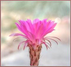 Pink ones too!