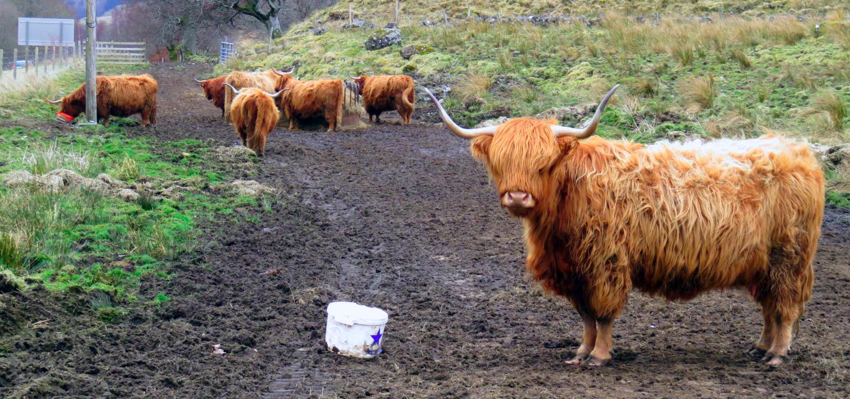 Ruta por Escocia en 4 días escocia en 4 días - 26577770061 8be0d3a8ee o - Visitar Escocia en 4 días