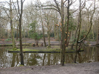 Epping Forest pond island
