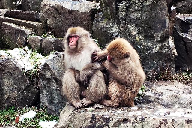 Nagano Snow Monkeys