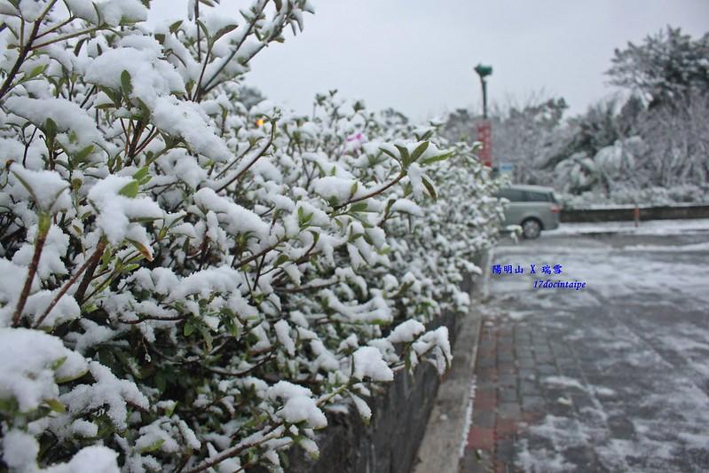 2016-台北陽明山-瑞雪-難得一見的雪白山景-17度C隨拍 (35)