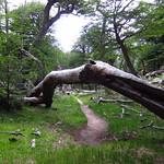 Mo, 14.12.15 - 13:08 - Verwunschener Wald