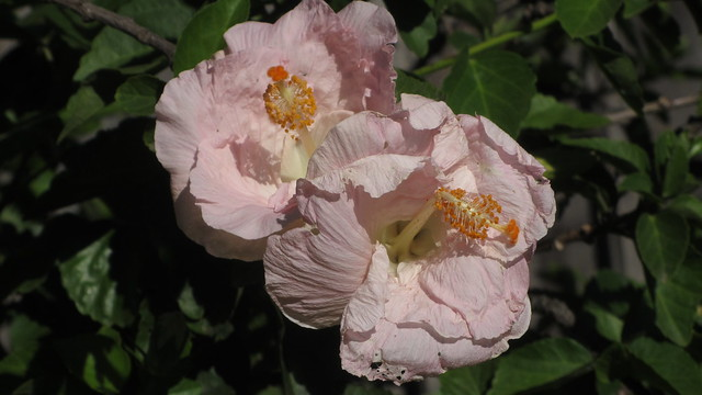 IMG_7164 renae rose goleta