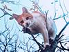 Cat Edition 6 (1)