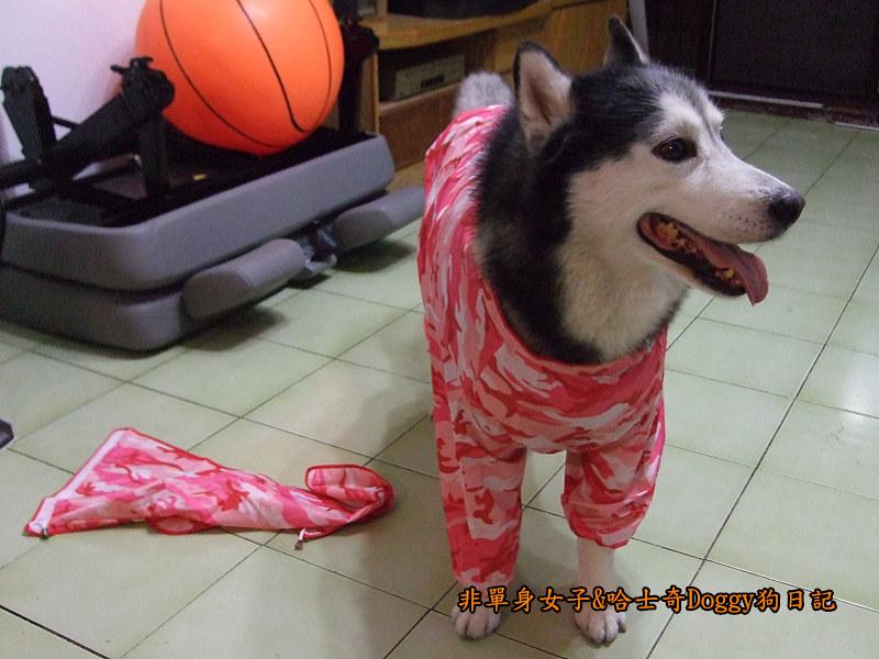 寵物雨衣迷彩服06