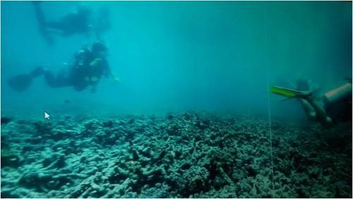 เกาะเต่า ปะการัง
