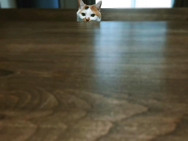 ひょっこり顔を出した三毛猫の写真  #cat #cats #catsofinstagram #catstagram #instacat #instagramcats #neko #nekostagram #猫 #ねこ #ネコ ネコ部 #猫部 #ぬこ #にゃんこ #ふわもこ部