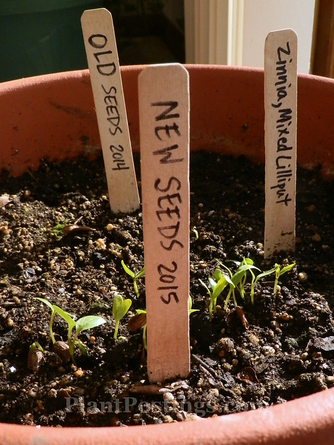 seedlings 1