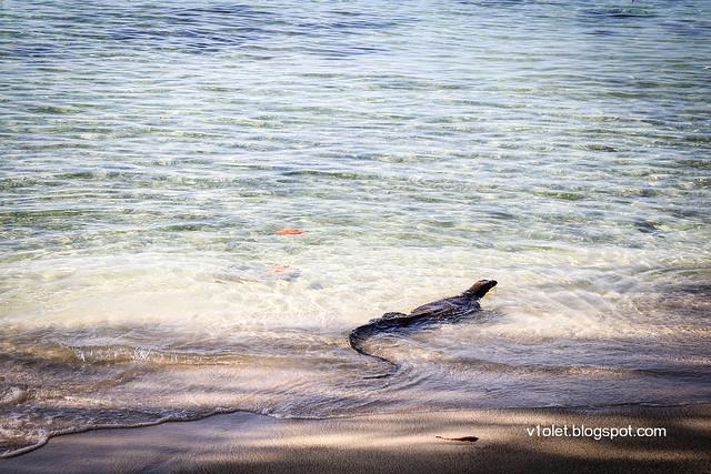 Pulau Putri Biawak6-9392rw