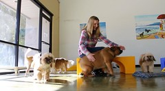 Can you say playtime? Owner Dawn enjoying the small furry babies. #smalldogsrule #happydogs #happyowner #lotsoflove #lotsoflaughs #flyinghighpetresort #doggiedaycare #dogboarding #grooming #dogtraining #petropolisexpressshop in #camarillo near #missionoak