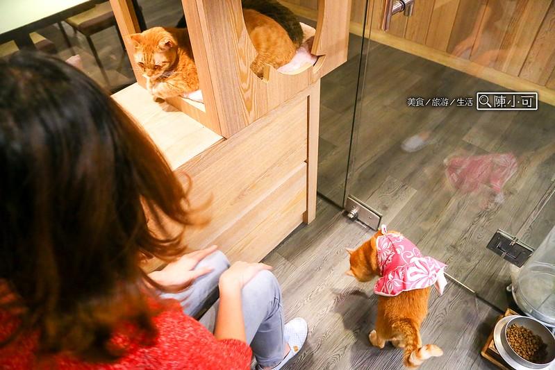 新莊餐廳,貓故事和食坊 @陳小可的吃喝玩樂