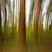 Tree Panning by Geoff Blondahl