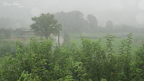 summer rain shower raindropp