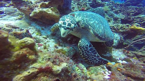 Turtle_6