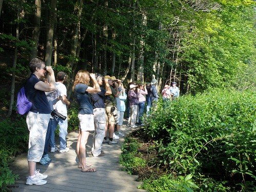 2nd Saturday Bird Walk
