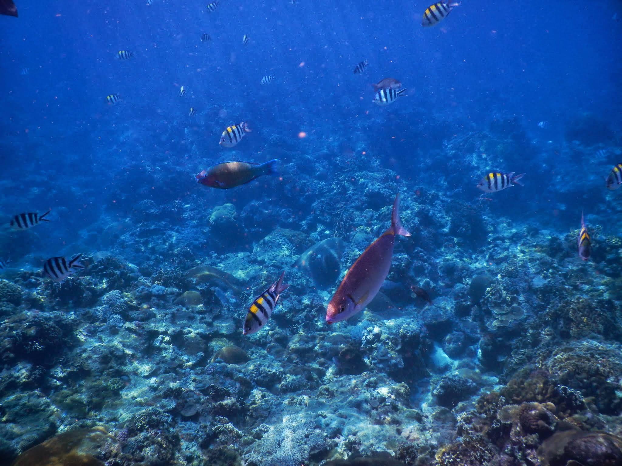 嘉駿分享綠島浮潛