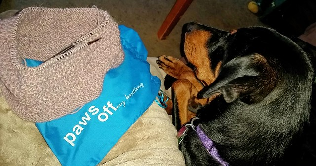 Doberman puppy mix snuggling while mom knits #adoptdontshop #dogmomswhoknit #LapdogCreations ©LapdogCreations