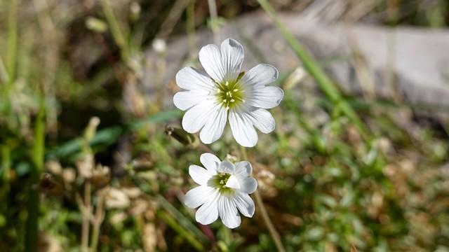 Odd flower again