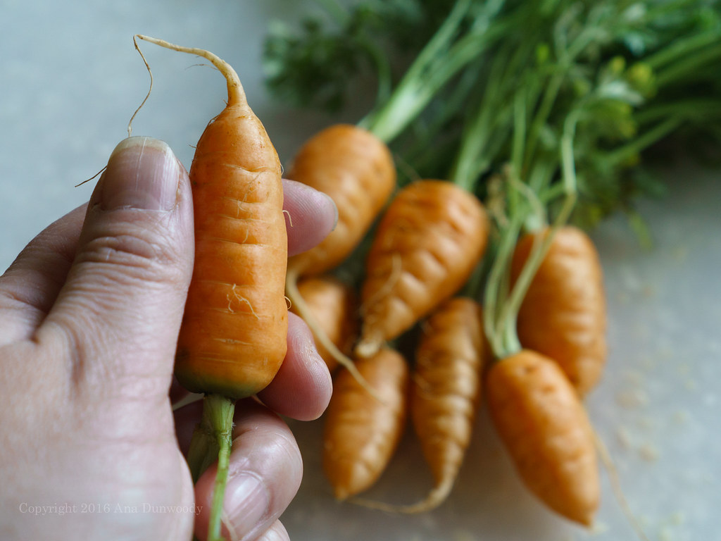 Thumbelina Carrots #2