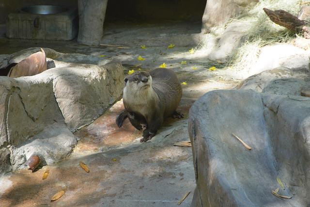 san diego zoo-32