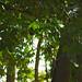 Jardí botànic i els animals- Jardín botánico y los animales