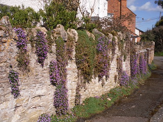 Garden Wall in Cuddington