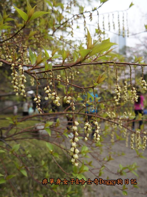 日本自由行小石川後樂園&東京巨蛋城15