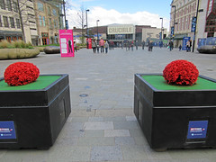 Tudor Square and the Crucible