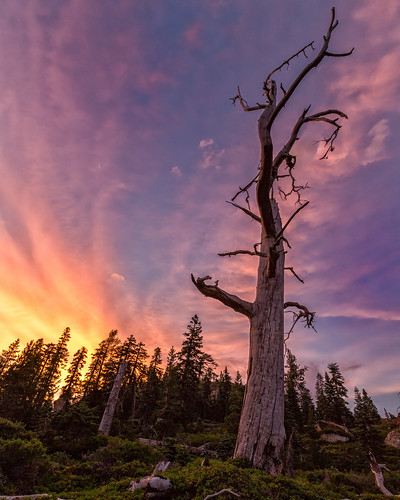california sunset tree landscape us unitedstates sierra
