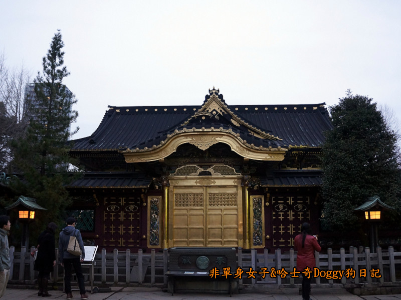 日本東京上野恩賜公園櫻花17