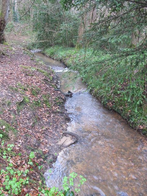 Stream in Squabb Wood