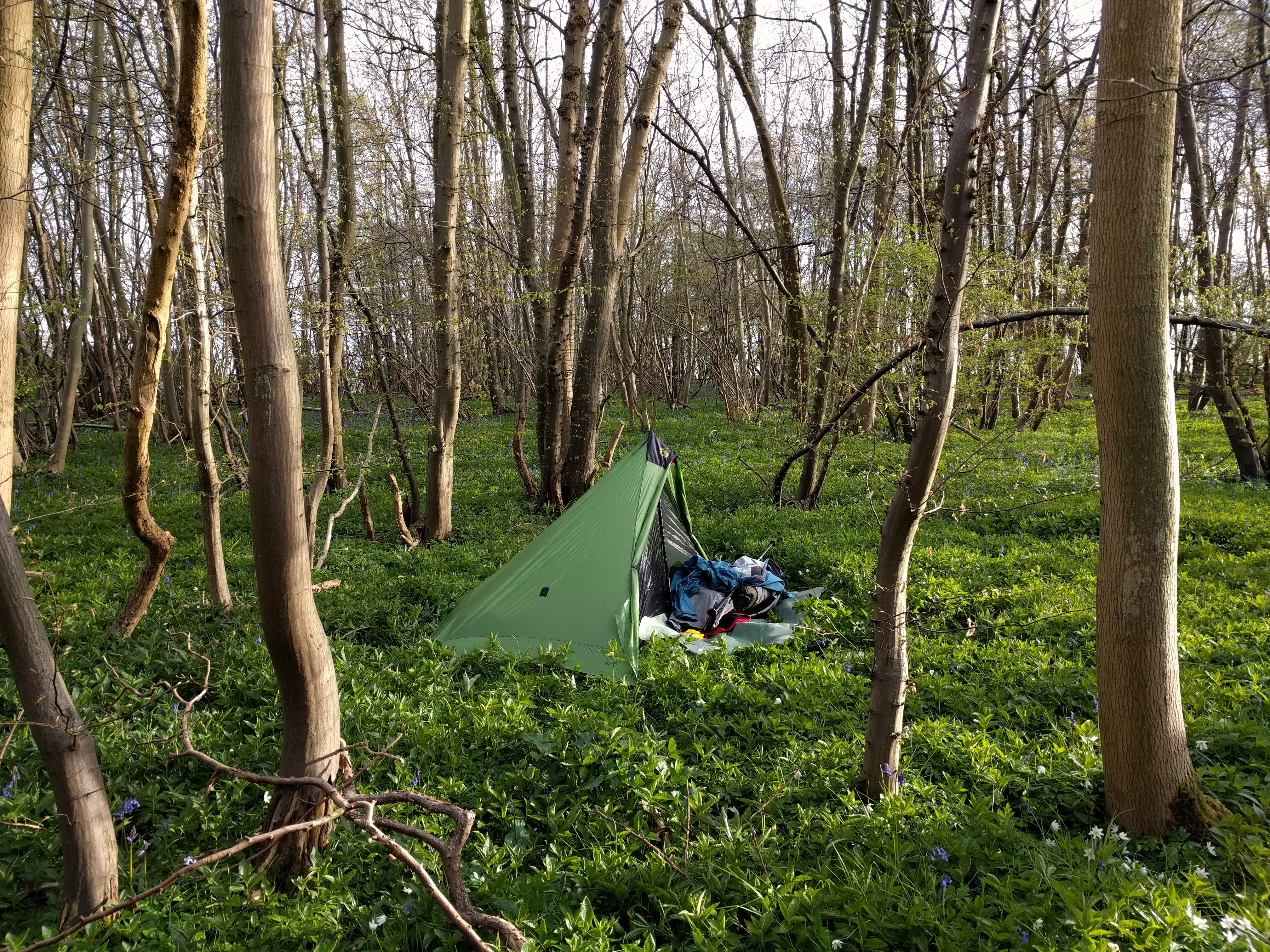 A woodland camp #sh