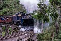 Puffing Billy Race 1May2016