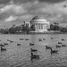 Tidal Basin by DSF Photography