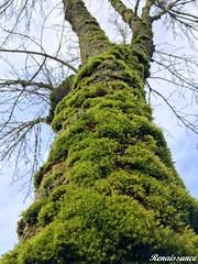 Mosses and Raining Season
