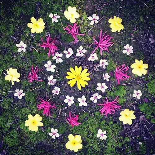 Mandala #waldorfhome #winter #winterturnstospring #flowers #mandala