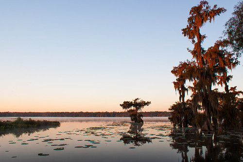 trees usa lake sunrise reeds still louisiana atchafalayabasin delta bayou swamp spanishmoss wetlands cypress lakemartin