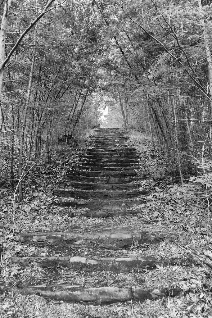 Wonderland Steps
