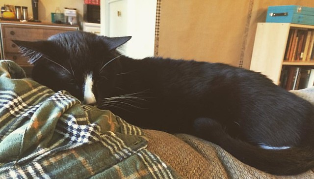 Piglet sleeping on my flannel #cats #tuxedocats #caturday