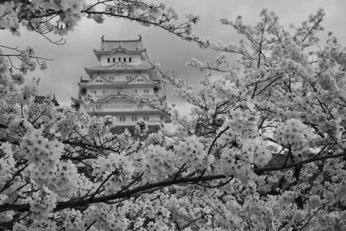 Himeji Castle area on APR 05, 2016 (5)
