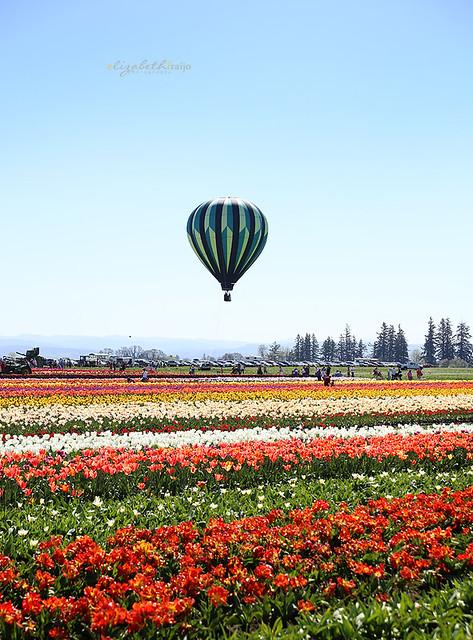 Tulips08W