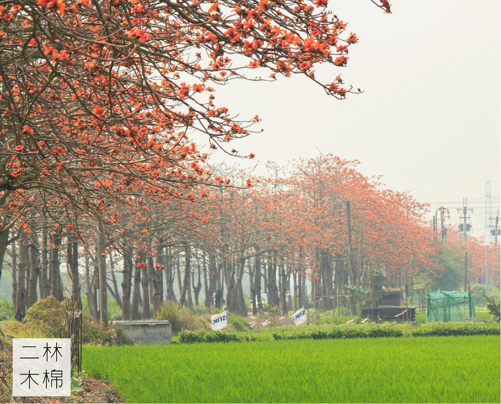 二林木棉道 (14)