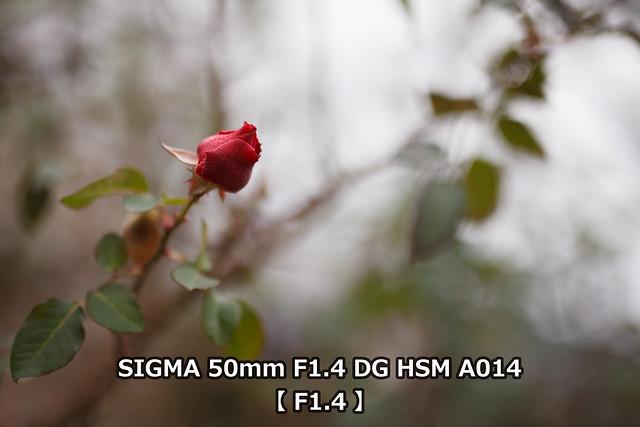 20160415_49_TEST3_SIGMA50F14_F14