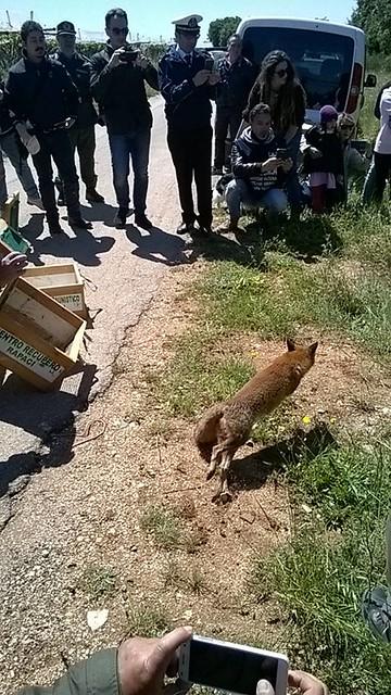 liberazione animali selvatici (2)