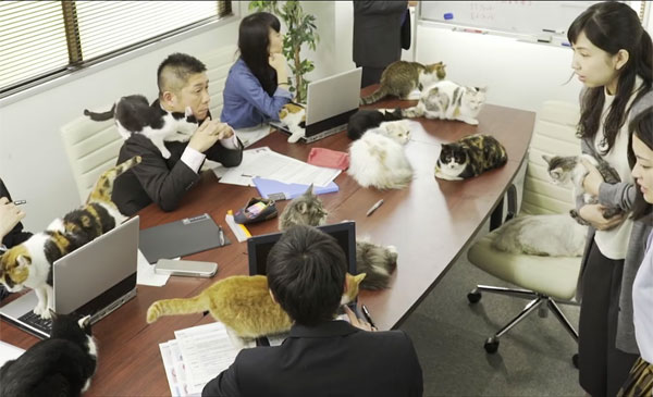 cats-in-office-conference-room