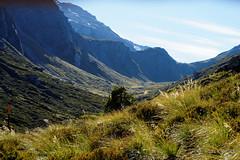 20160209-07-Rees-Dart day 2 - Backlit vegetation